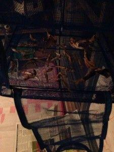 秋谷漁港で釣った大量の・・・イワシ!せっかくなので手作り煮干しに。