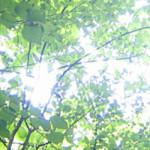 武蔵野中央公園、楽しいです!
