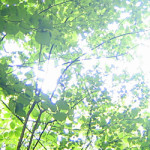 狭山•境緑道、最高です!